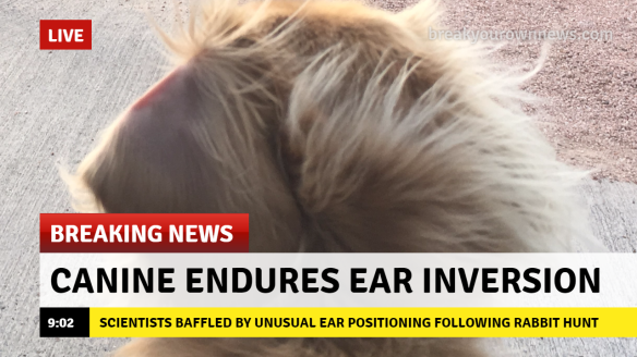 breaking-news